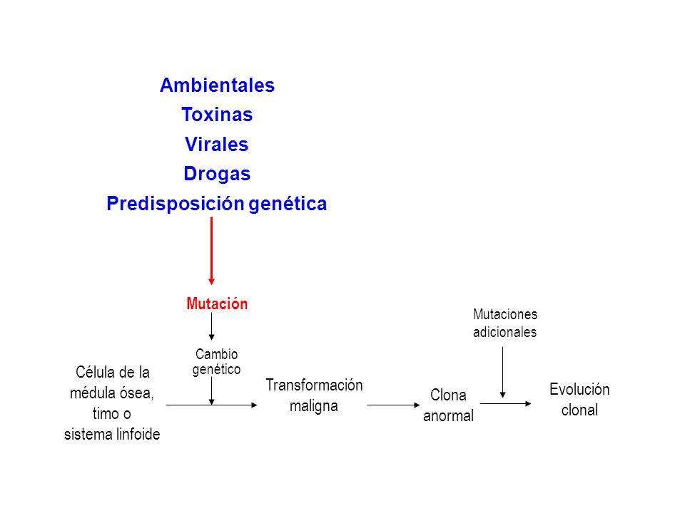 Célula de la médula ósea, timo o sistema linfoide Mutación Cambio genético Transformación maligna Clona anormal Evolución clonal Mutaciones adicionales Expresión genética alterada Oncogen Gen supresor de tumores Traslocación Mutación puntual Amplificación Deleción