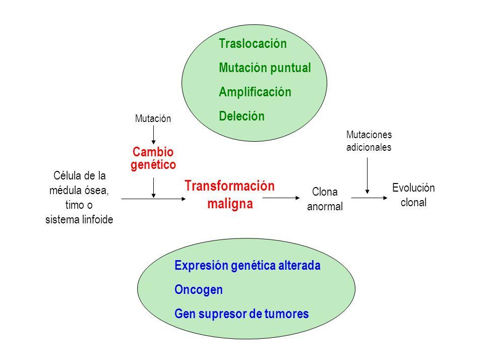 Célula de la médula ósea, timo o sistema linfoide Mutación Cambio genético Transformación maligna Clona maligna Evolución clonal Mutaciones adicionales Apoptosis Proliferación Diferenciación