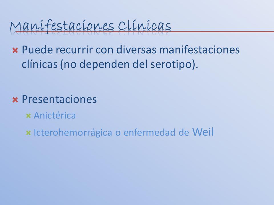 Puede recurrir con diversas manifestaciones clínicas (no dependen del serotipo). Presentaciones Anictérica Icterohemorrágica o enfermedad de Weil