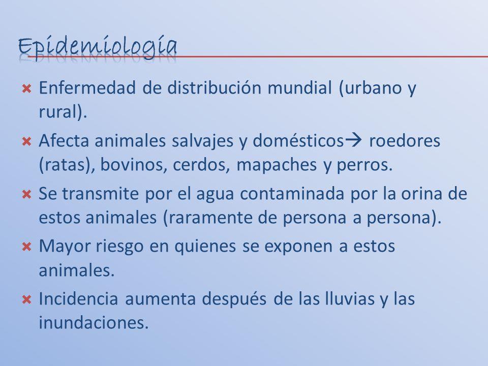 Enfermedad de distribución mundial (urbano y rural). Afecta animales salvajes y domésticos roedores (ratas), bovinos, cerdos, mapaches y perros. Se tr