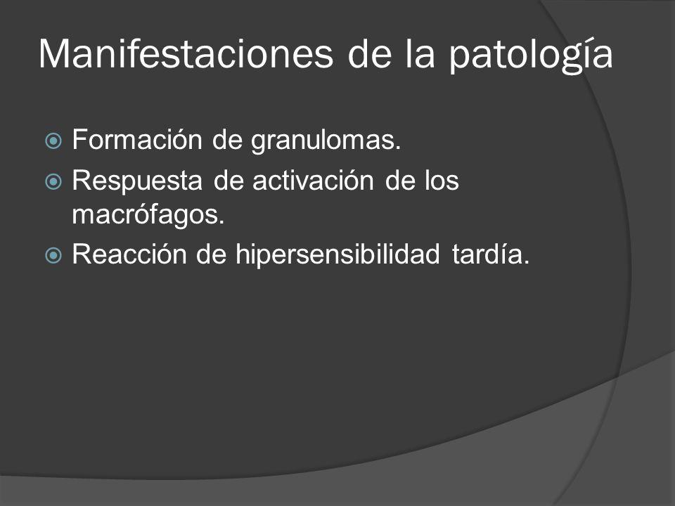 Manifestaciones de la patología Formación de granulomas. Respuesta de activación de los macrófagos. Reacción de hipersensibilidad tardía.