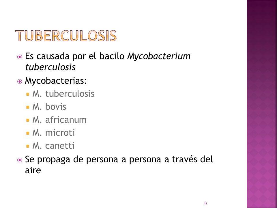 Es causada por el bacilo Mycobacterium tuberculosis Mycobacterias: M. tuberculosis M. bovis M. africanum M. microti M. canetti Se propaga de persona a