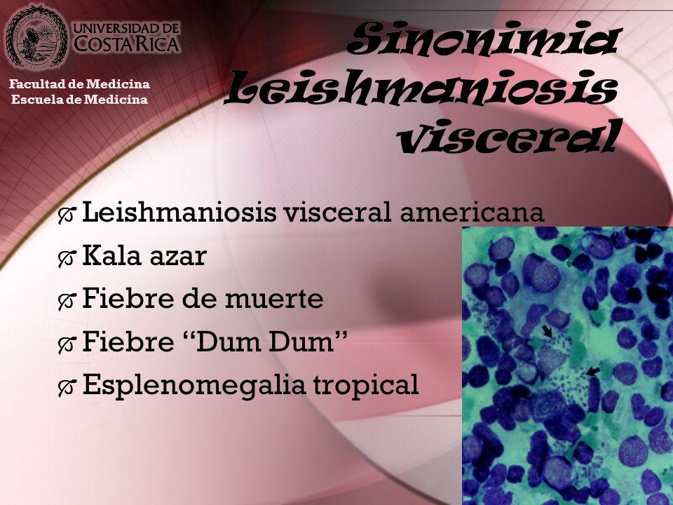 Sinonimia Leishmaniosis visceral Leishmaniosis visceral americana Kala azar Fiebre de muerte Fiebre Dum Dum Esplenomegalia tropical Leishmaniosis visc