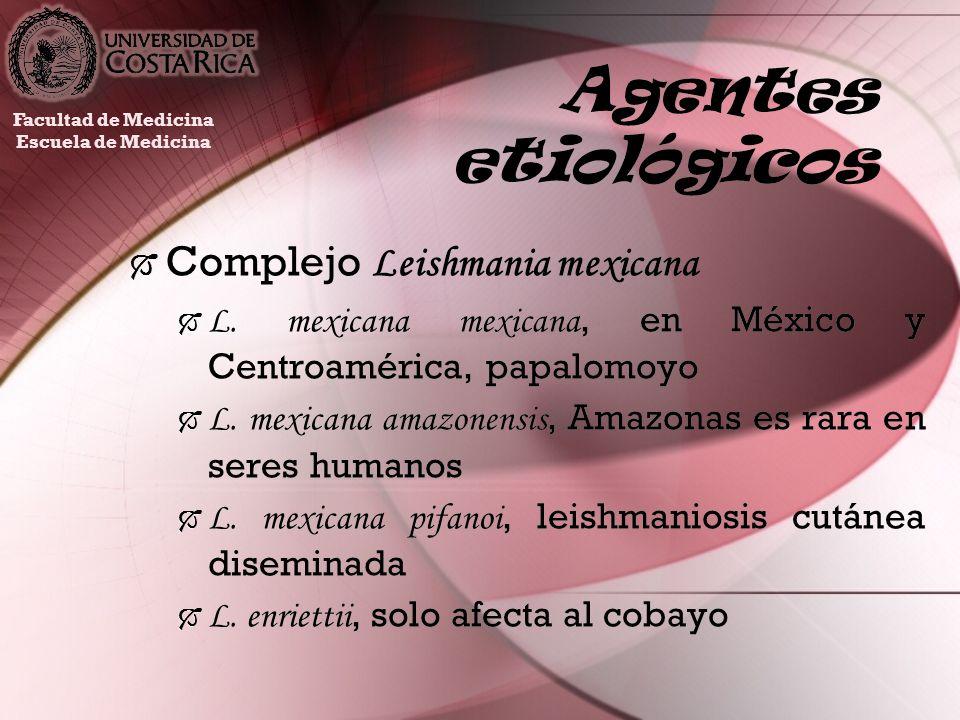 Agentes etiológicos Complejo Leishmania mexicana L. mexicana mexicana, en México y Centroamérica, papalomoyo L. mexicana amazonensis, Amazonas es rara