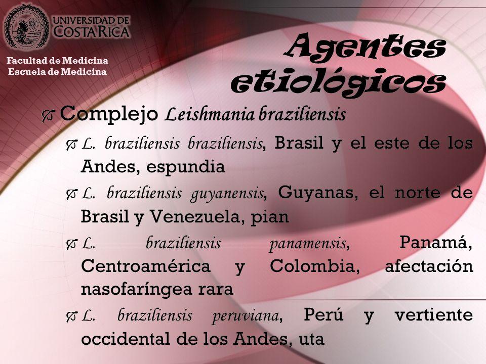 Agentes etiológicos Complejo Leishmania braziliensis L. braziliensis braziliensis, Brasil y el este de los Andes, espundia L. braziliensis guyanensis,