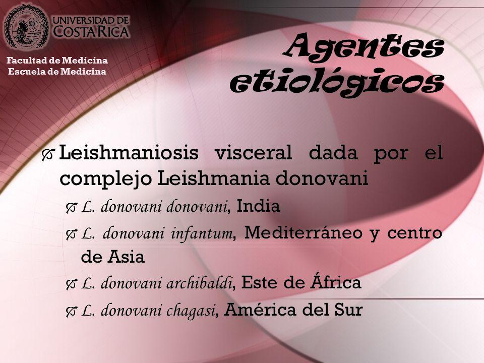 Agentes etiológicos Leishmaniosis visceral dada por el complejo Leishmania donovani L. donovani donovani, India L. donovani infantum, Mediterráneo y c
