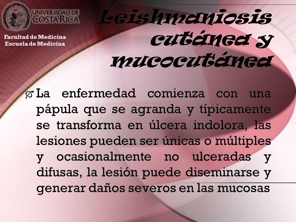 Leishmaniosis cutánea y mucocutánea La enfermedad comienza con una pápula que se agranda y típicamente se transforma en úlcera indolora, las lesiones
