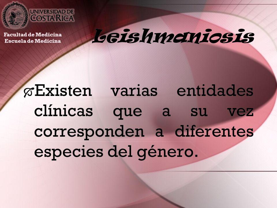 Leishmaniosis Existen varias entidades clínicas que a su vez corresponden a diferentes especies del género. Facultad de Medicina Escuela de Medicina
