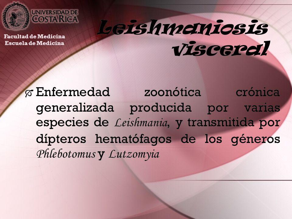 Leishmaniosis visceral Enfermedad zoonótica crónica generalizada producida por varias especies de Leishmania, y transmitida por dípteros hematófagos d