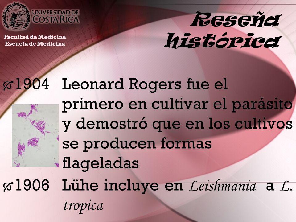 Reseña histórica 1904Leonard Rogers fue el primero en cultivar el parásito y demostró que en los cultivos se producen formas flageladas 1906Lühe inclu