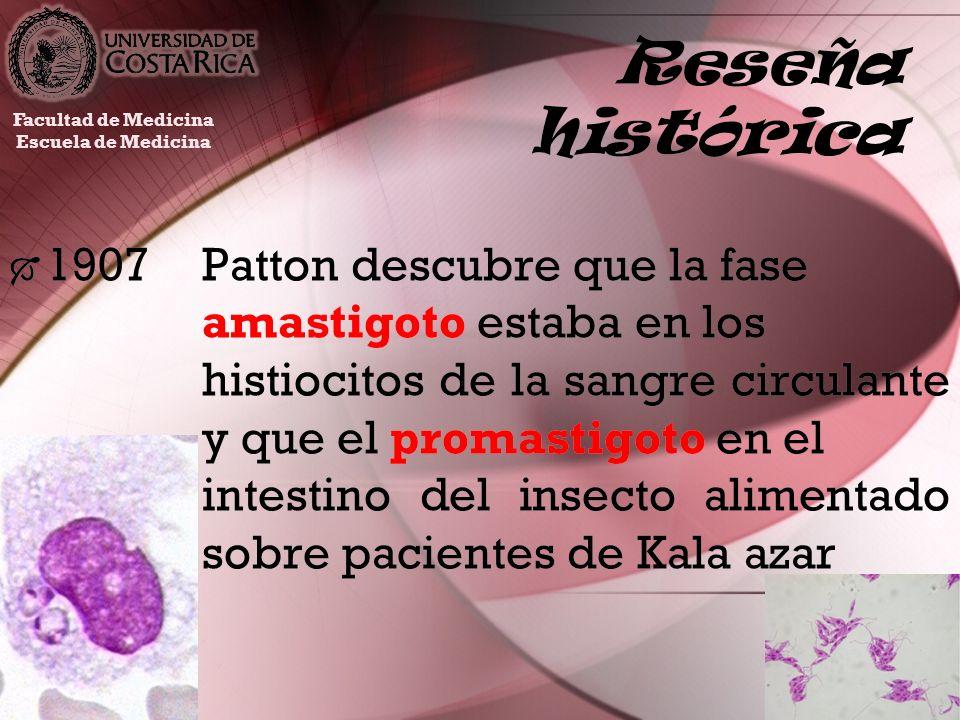 Reseña histórica 1907Patton descubre que la fase amastigoto estaba en los histiocitos de la sangre circulante y que el promastigoto en el intestino de