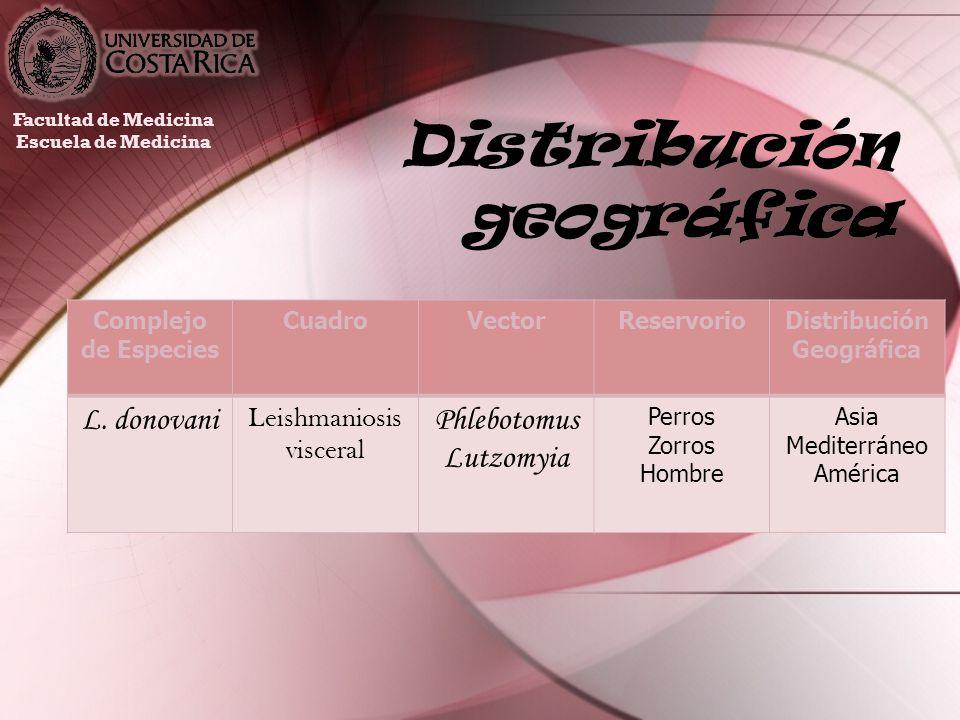 Distribución geográfica Facultad de Medicina Escuela de Medicina Complejo de Especies CuadroVectorReservorioDistribución Geográfica L. donovani Leishm