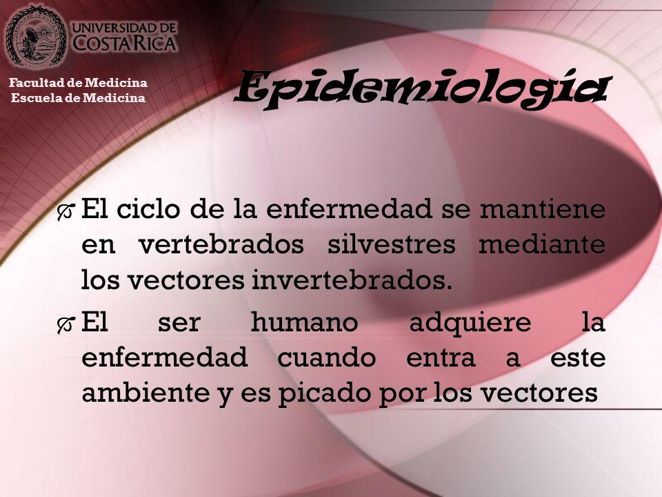Epidemiología El ciclo de la enfermedad se mantiene en vertebrados silvestres mediante los vectores invertebrados. El ser humano adquiere la enfermeda