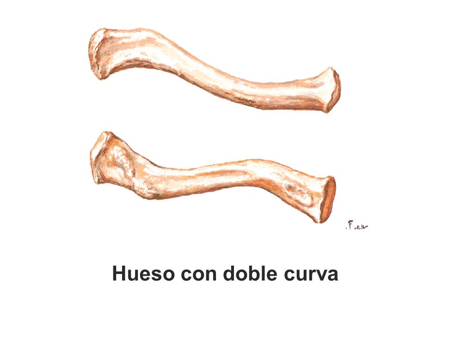 Hueso con doble curva