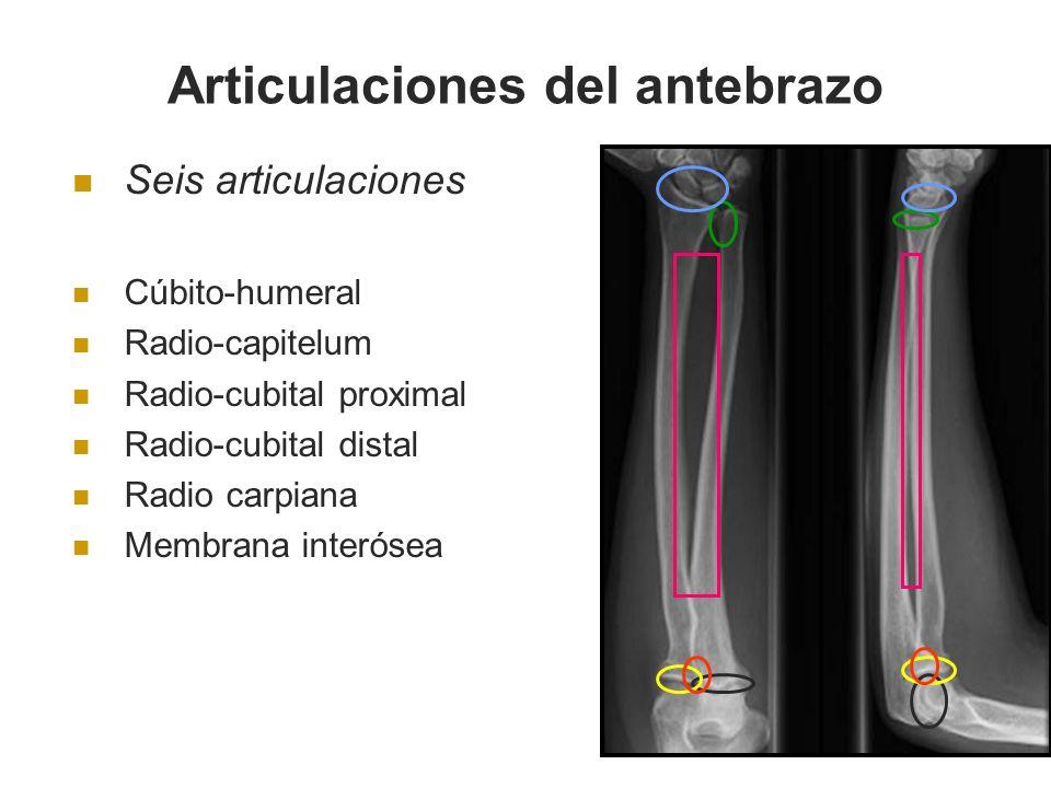 Seis articulaciones Cúbito-humeral Radio-capitelum Radio-cubital proximal Radio-cubital distal Radio carpiana Membrana interósea Articulaciones del an