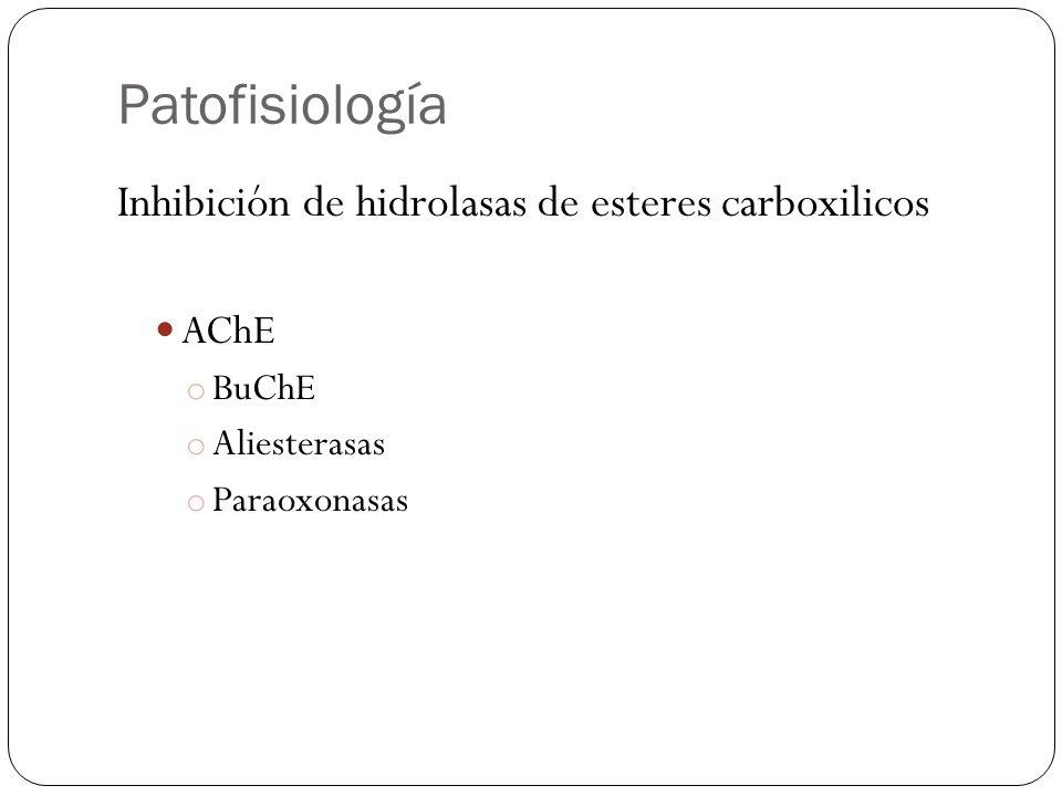Patofisiología Inhibición de hidrolasas de esteres carboxilicos AChE o BuChE o Aliesterasas o Paraoxonasas