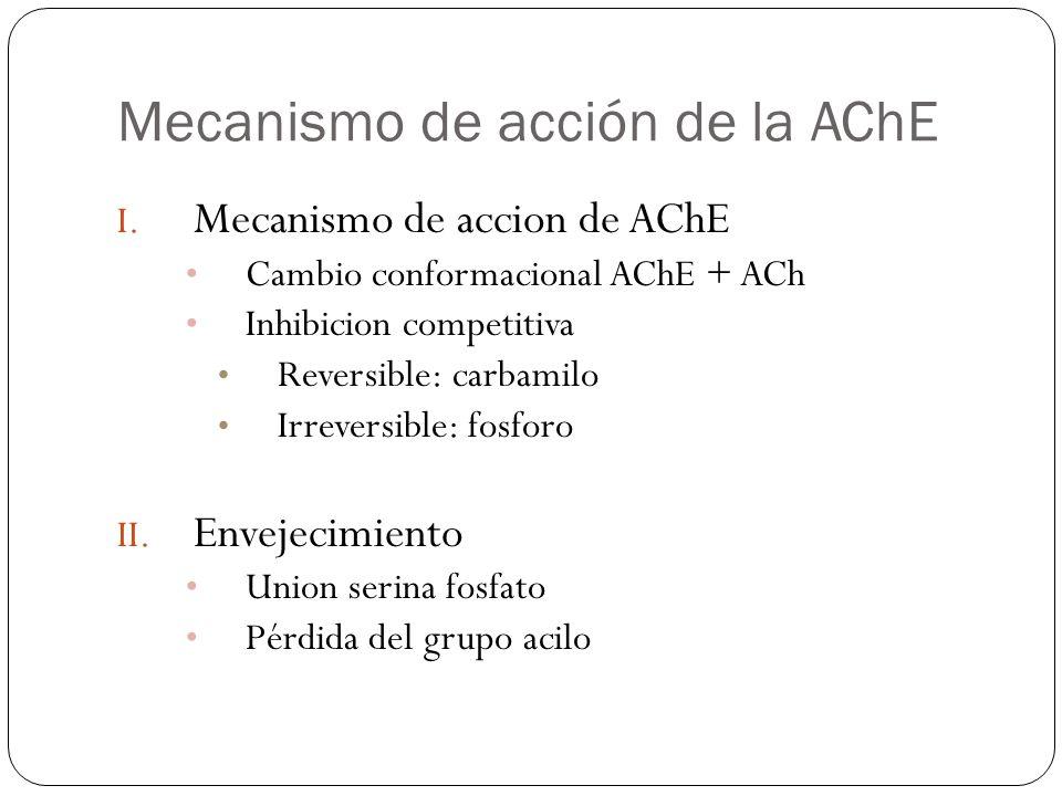 Mecanismo de acción de la AChE I. Mecanismo de accion de AChE Cambio conformacional AChE + ACh Inhibicion competitiva Reversible: carbamilo Irreversib