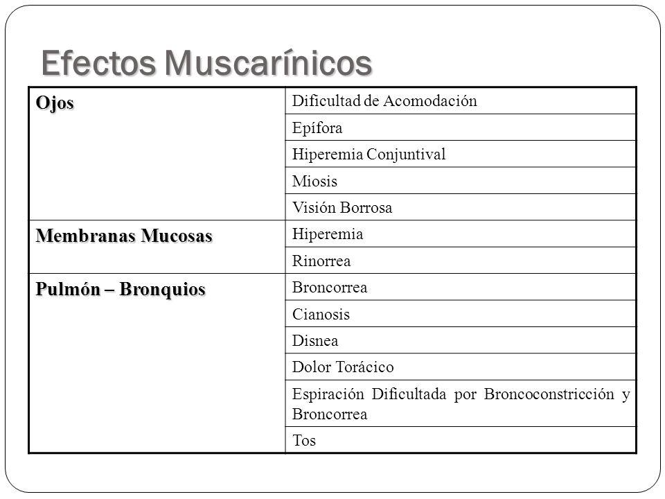 Efectos Muscarínicos Ojos Dificultad de Acomodación Epífora Hiperemia Conjuntival Miosis Visión Borrosa Membranas Mucosas Hiperemia Rinorrea Pulmón –
