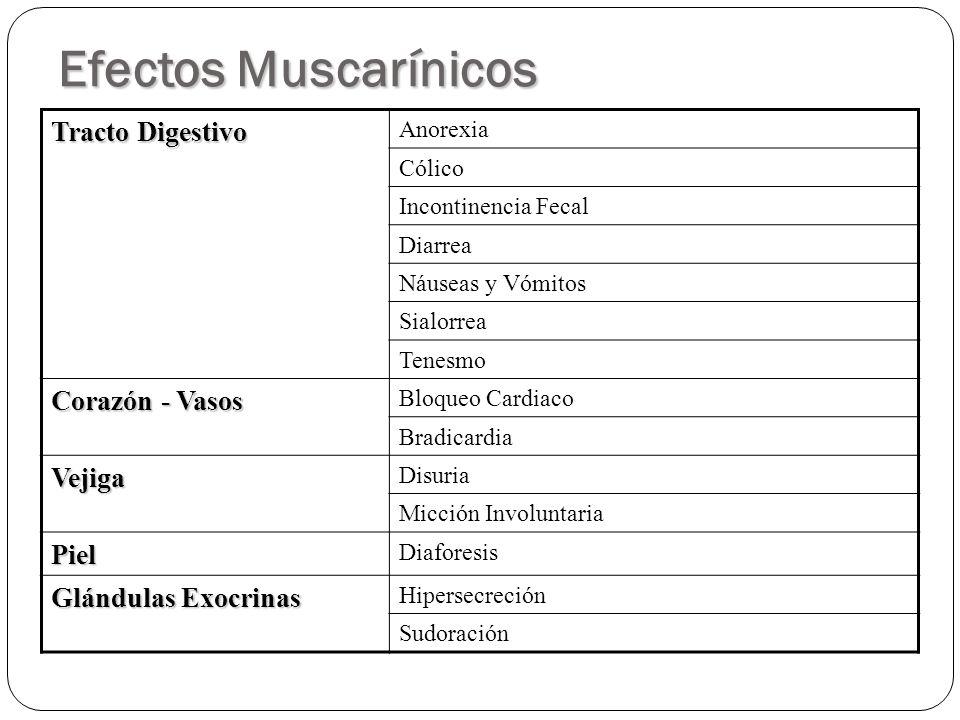 Efectos Muscarínicos Tracto Digestivo Anorexia Cólico Incontinencia Fecal Diarrea Náuseas y Vómitos Sialorrea Tenesmo Corazón - Vasos Bloqueo Cardiaco