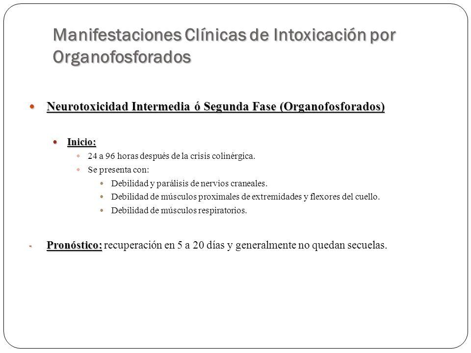 Manifestaciones Clínicas de Intoxicación por Organofosforados Neurotoxicidad Intermedia ó Segunda Fase (Organofosforados) Neurotoxicidad Intermedia ó
