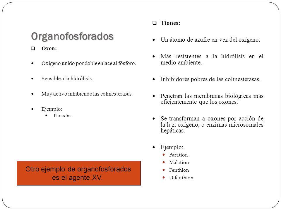 Toxicidad Relativa de los Organofosforados Altamente TóxicosDL 50 (mg/Kg) P.F.T.E.1.5 Forato (Thimet®)2 Terbufos (Counter®) EPN26 Fenamifos (Nemycar®)9.6 Fensulfation (Dasamit®)2-10 Fosfalon (Cylan®)8.9 Mefosfolan (Cytrolane)8.9 Metil-Paration (Folidol)9-25 Paration (Parathion)6 Metil Anzifos (Gusathion)5-20 Metamidofos (Tamáron)18-21 Monocrotofos (Azodrin)