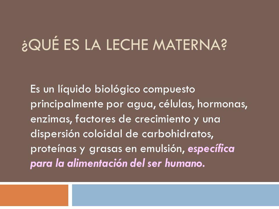 ¿QUÉ ES LA LECHE MATERNA? Es un líquido biológico compuesto principalmente por agua, células, hormonas, enzimas, factores de crecimiento y una dispers