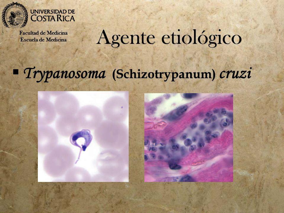Agente etiológico Trypanosoma (Schizotrypanum) cruzi Facultad de Medicina Escuela de Medicina