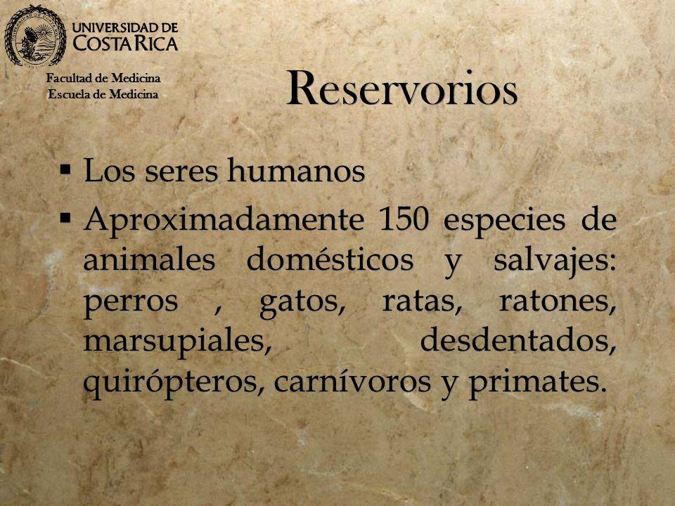 Reservorios Los seres humanos Aproximadamente 150 especies de animales domésticos y salvajes: perros, gatos, ratas, ratones, marsupiales, desdentados,