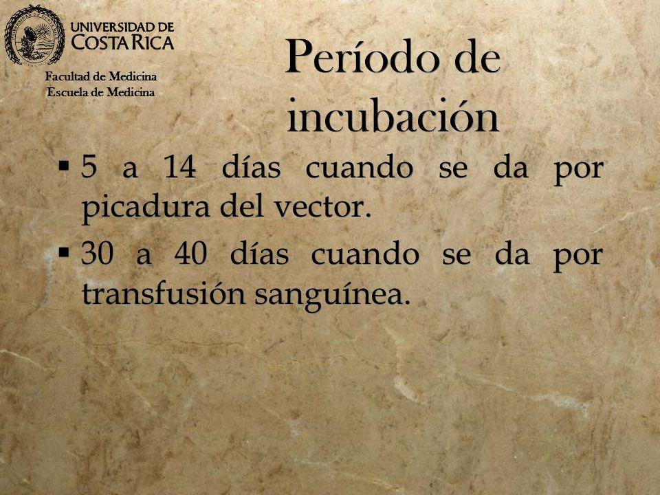 Período de incubación 5 a 14 días cuando se da por picadura del vector. 30 a 40 días cuando se da por transfusión sanguínea. 5 a 14 días cuando se da