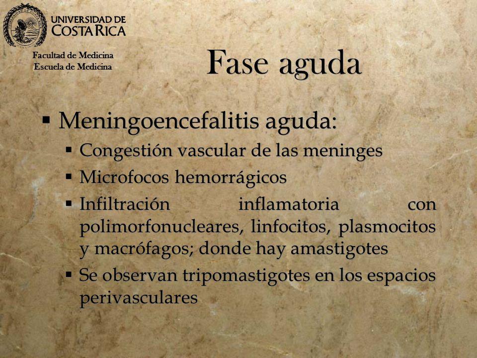 Fase aguda Meningoencefalitis aguda: Congestión vascular de las meninges Microfocos hemorrágicos Infiltración inflamatoria con polimorfonucleares, lin