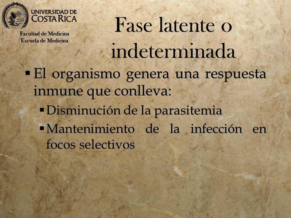 Fase latente o indeterminada El organismo genera una respuesta inmune que conlleva: Disminución de la parasitemia Mantenimiento de la infección en foc