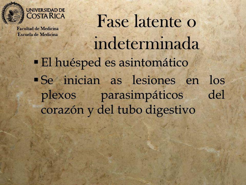 Fase latente o indeterminada El huésped es asintomático Se inician as lesiones en los plexos parasimpáticos del corazón y del tubo digestivo El huéspe