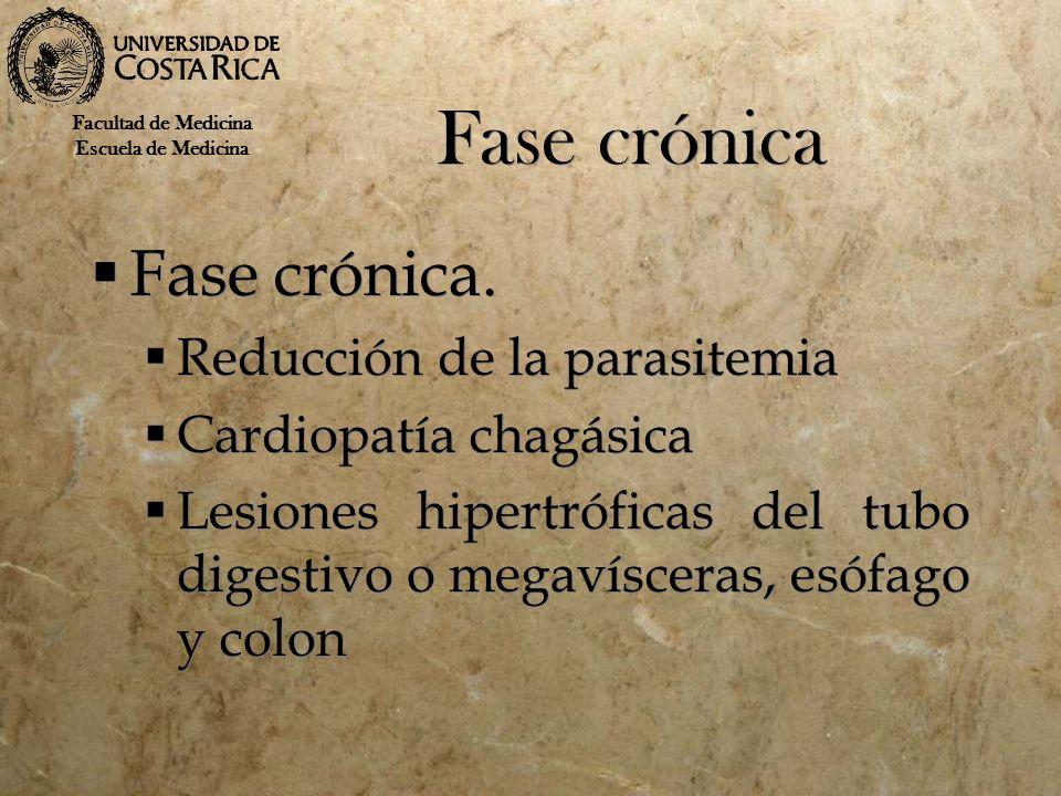 Fase crónica Fase crónica. Reducción de la parasitemia Cardiopatía chagásica Lesiones hipertróficas del tubo digestivo o megavísceras, esófago y colon