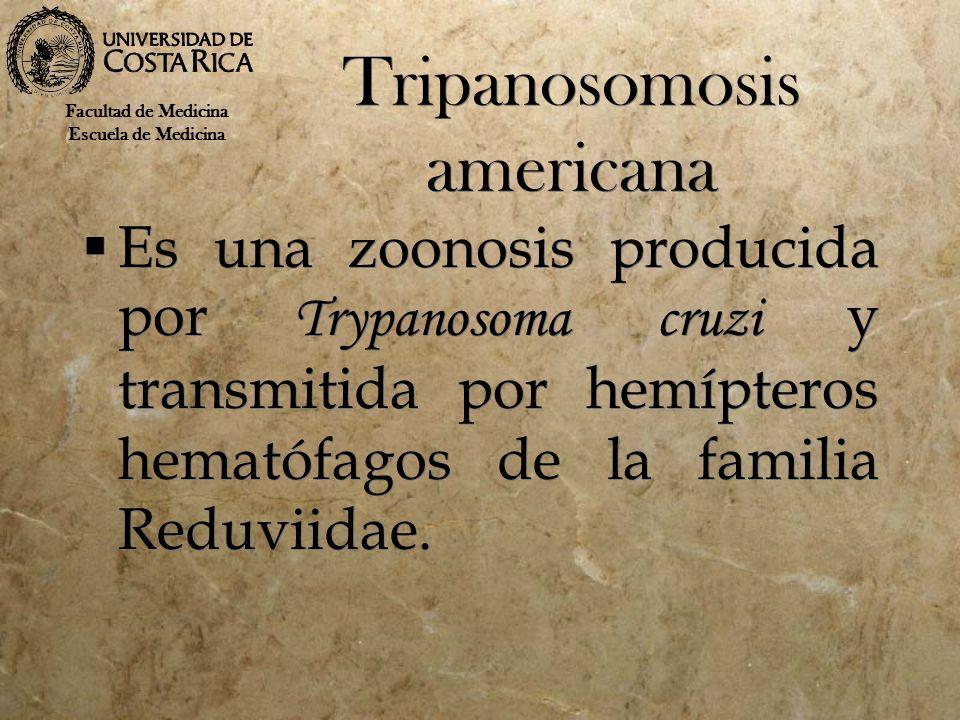 Mecanismos de trasmisión Los vectores infectados, pertenecientes a la familia Reduviidae pueden pertenecer a los géneros Panstrongylus, Triatoma o Rhodnius ; excretan el Trypanosoma en las heces, los insectos defecan durante la hematofagia.