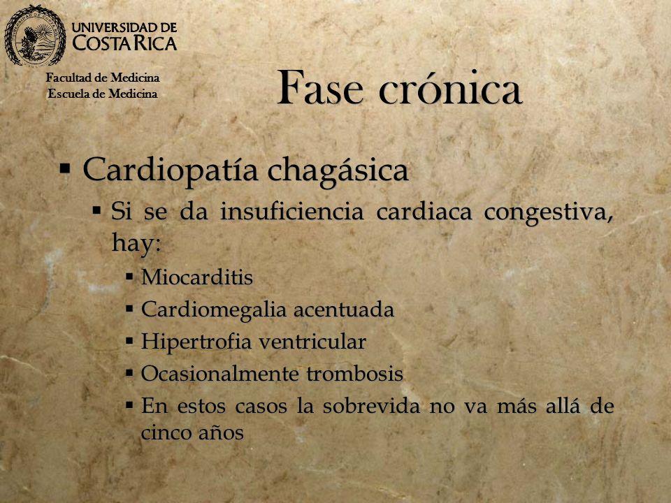 Fase crónica Cardiopatía chagásica Si se da insuficiencia cardiaca congestiva, hay: Miocarditis Cardiomegalia acentuada Hipertrofia ventricular Ocasio