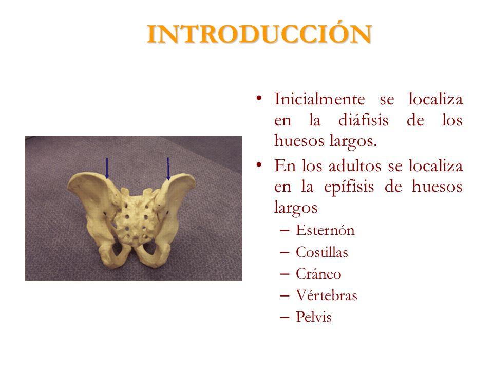 INTRODUCCIÓN Inicialmente se localiza en la diáfisis de los huesos largos. En los adultos se localiza en la epífisis de huesos largos – Esternón – Cos