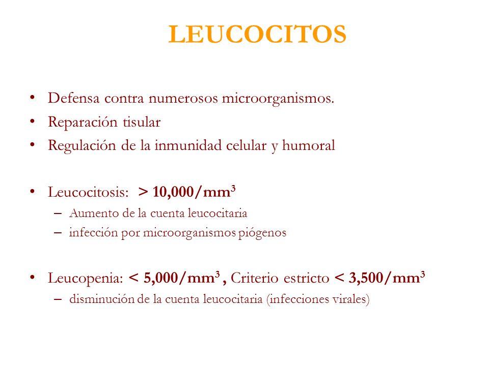 Defensa contra numerosos microorganismos. Reparación tisular Regulación de la inmunidad celular y humoral Leucocitosis: > 10,000/mm 3 – Aumento de la