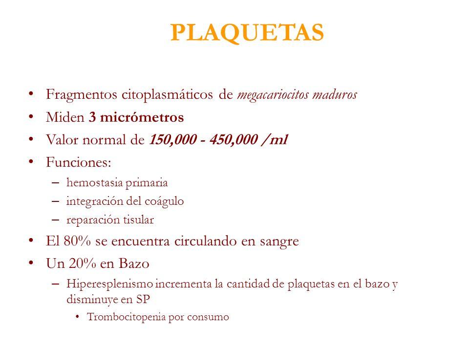 PLAQUETAS Fragmentos citoplasmáticos de megacariocitos maduros Miden 3 micrómetros Valor normal de 150,000 - 450,000 /ml Funciones: – hemostasia prima
