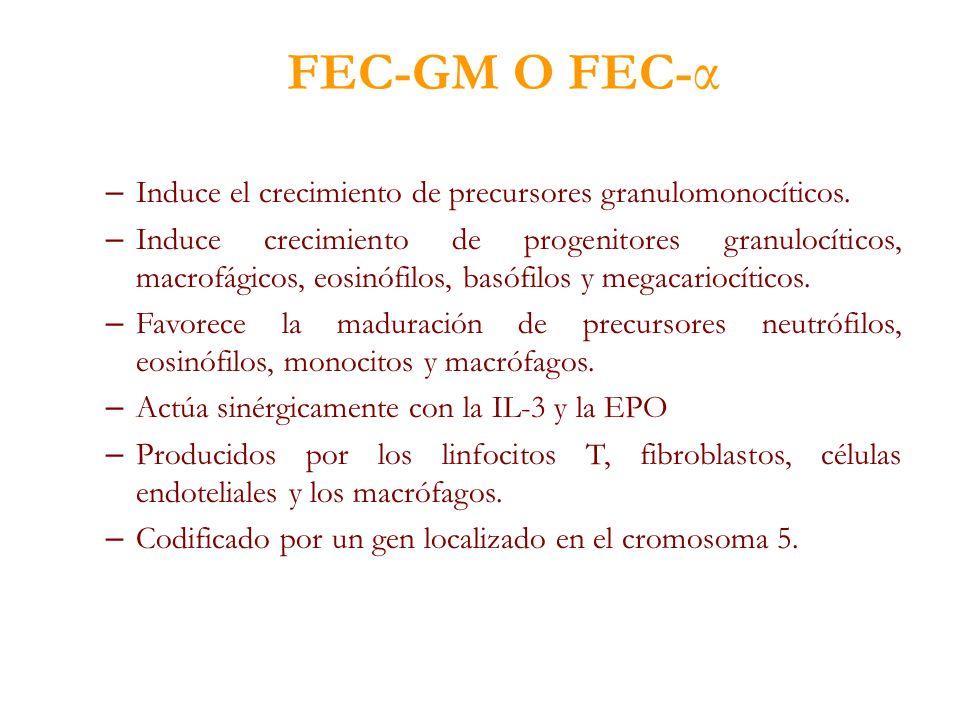 FEC-GM O FEC- α – Induce el crecimiento de precursores granulomonocíticos. – Induce crecimiento de progenitores granulocíticos, macrofágicos, eosinófi