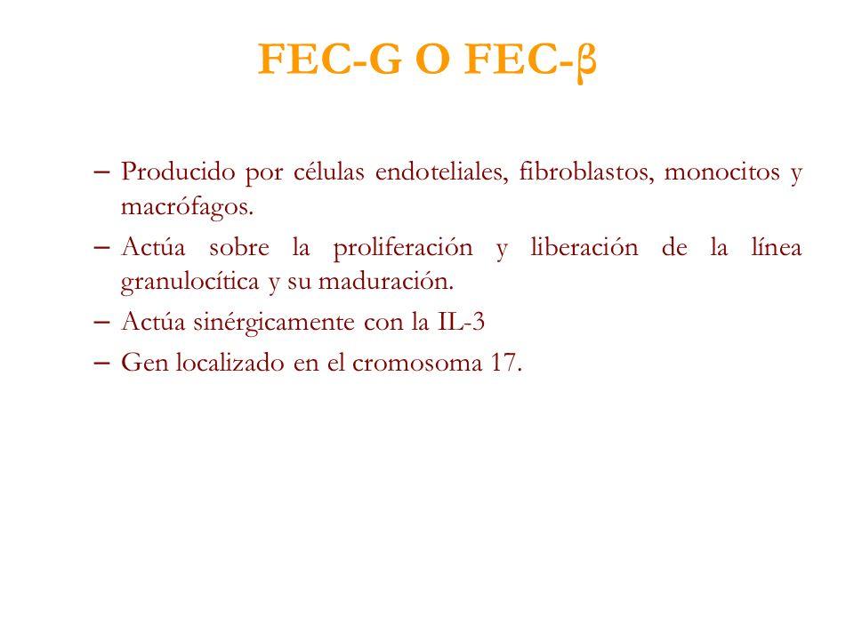 FEC-G O FEC-β – Producido por células endoteliales, fibroblastos, monocitos y macrófagos. – Actúa sobre la proliferación y liberación de la línea gran