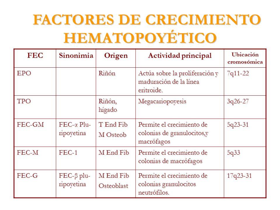 FACTORES DE CRECIMIENTO HEMATOPOYÉTICO FECSinonimiaOrigen Actividad principal Ubicación cromosómica EPORiñón Actúa sobre la proliferación y maduración