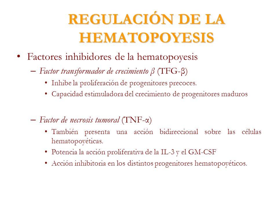 REGULACIÓN DE LA HEMATOPOYESIS Factores inhibidores de la hematopoyesis – Factor transformador de crecimiento β (TFG-β) Inhibe la proliferación de pro