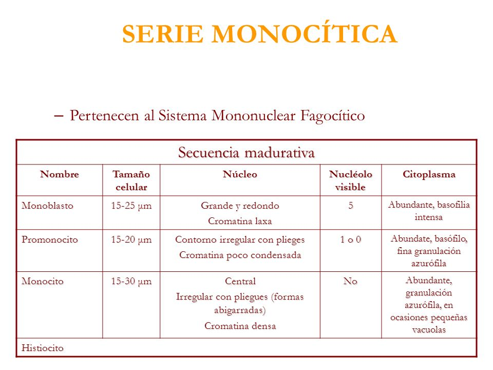 SERIE MONOCÍTICA – Pertenecen al Sistema Mononuclear Fagocítico Secuencia madurativa Nombre Tamaño celular Núcleo Nucléolo visible Citoplasma Monoblas