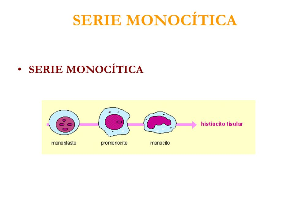 SERIE MONOCÍTICA