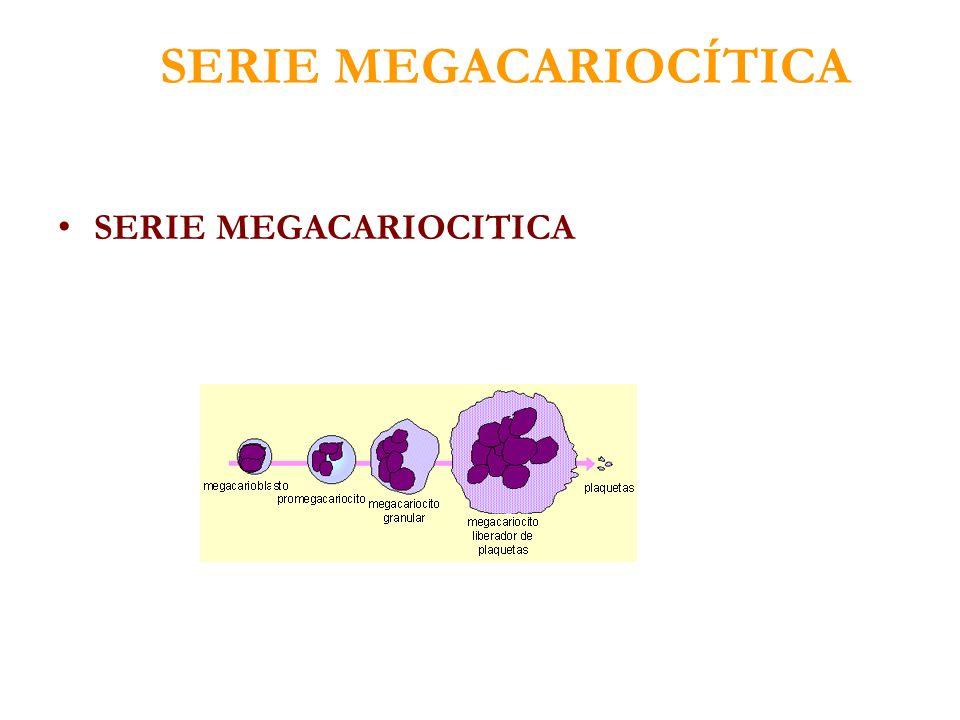 SERIE MEGACARIOCÍTICA SERIE MEGACARIOCITICA
