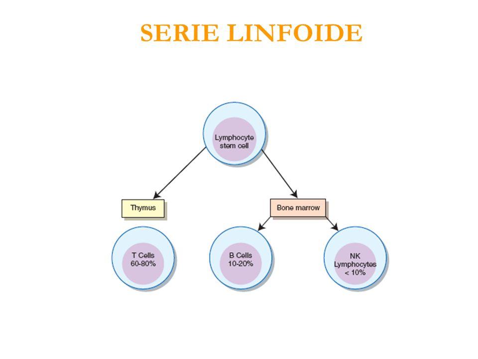 SERIE LINFOIDE