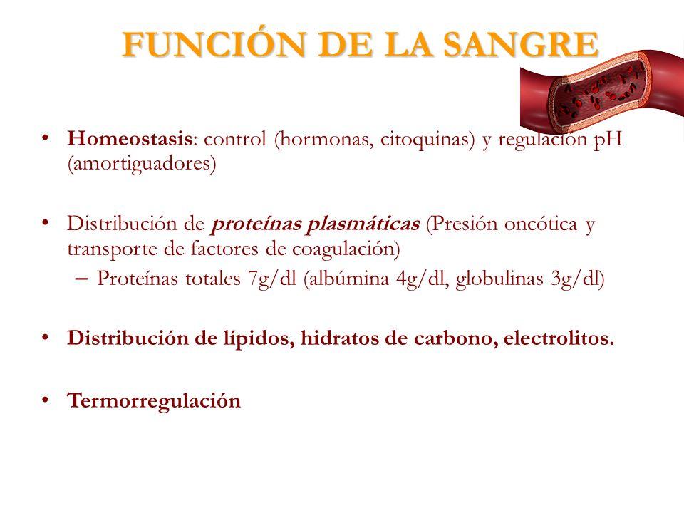 FUNCIÓN DE LA SANGRE Homeostasis: control (hormonas, citoquinas) y regulación pH (amortiguadores) Distribución de proteínas plasmáticas (Presión oncót