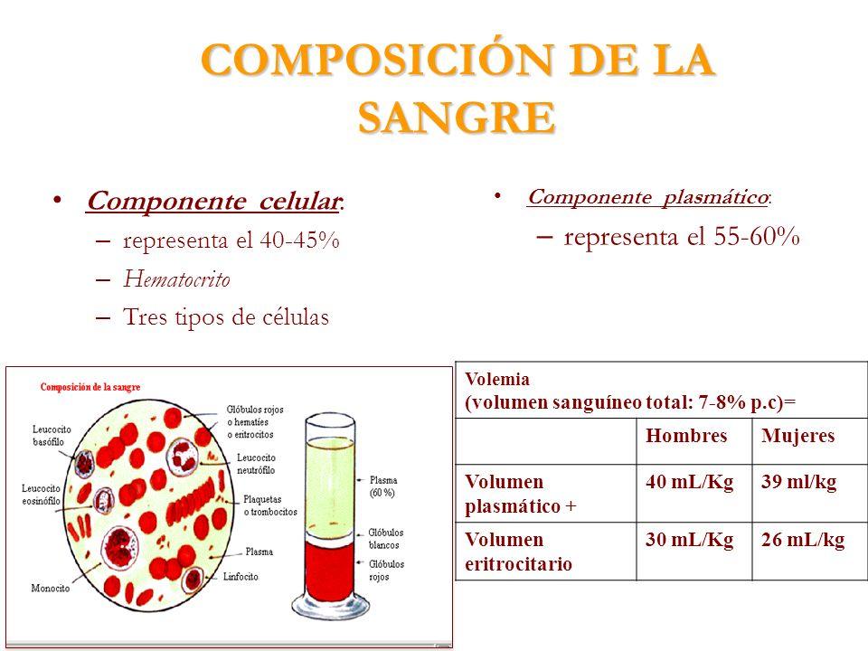 COMPOSICIÓN DE LA SANGRE Componente celular: – representa el 40-45% – Hematocrito – Tres tipos de células Componente plasmático: – representa el 55-60