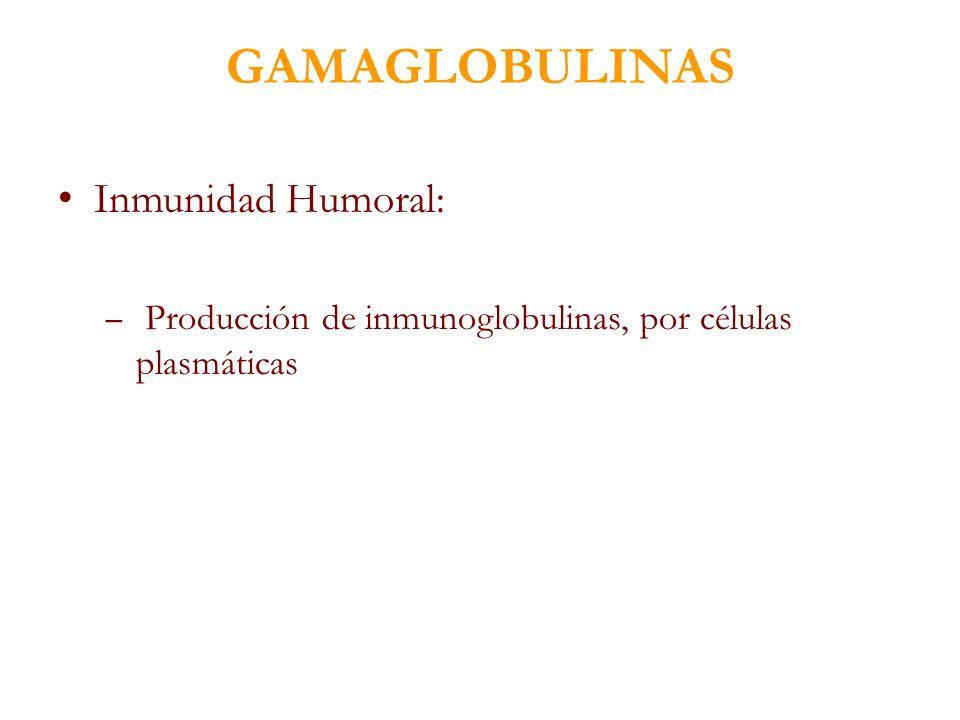 GAMAGLOBULINAS Inmunidad Humoral: – Producción de inmunoglobulinas, por células plasmáticas