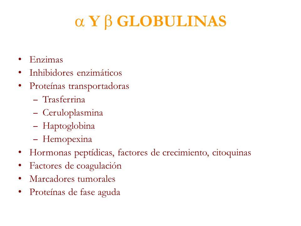 Y GLOBULINAS Enzimas Inhibidores enzimáticos Proteínas transportadoras – Trasferrina – Ceruloplasmina – Haptoglobina – Hemopexina Hormonas peptídicas,